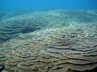 サンゴ群集
